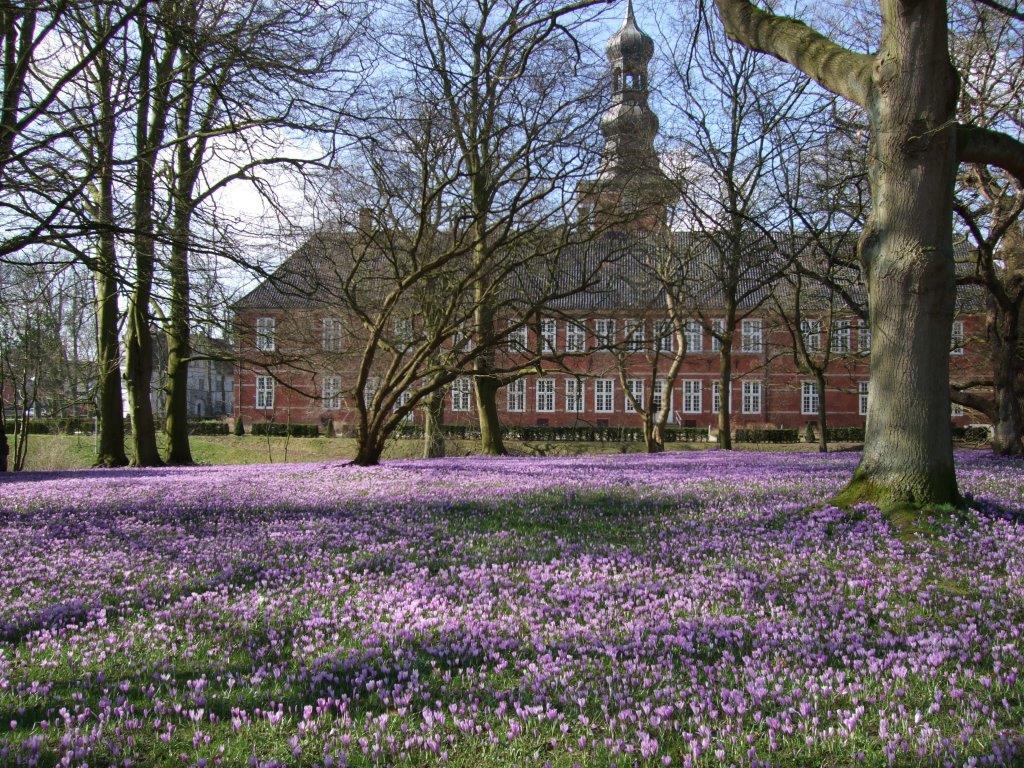 Krokusblüte_Schloss Hintergrund